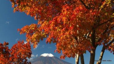 山中湖の紅葉も見頃に