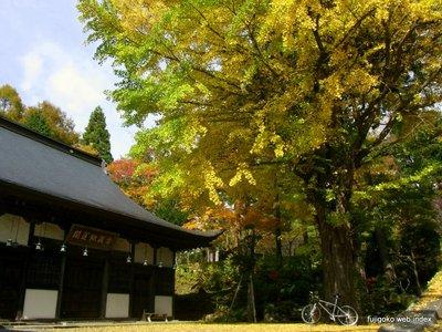 寿徳寺の銀杏