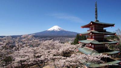 新倉山浅間公園から桜と富士と五重の塔