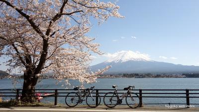 桜めぐりには自転車がサイコー