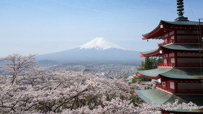 富士吉田のド定番スポットより満開の桜