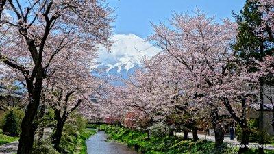 お宮橋から名残桜