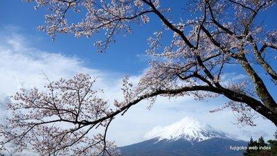 富士見孝徳公園の桜 20170418