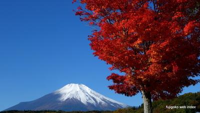 遅めの冠雪と紅葉と