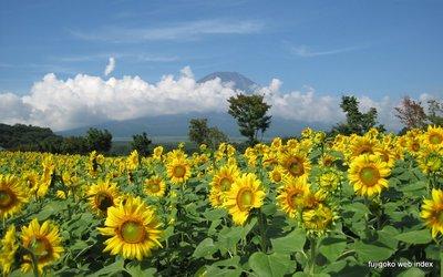 晴れと雷雨の繰り返し〜花の都のひまわりと富士山