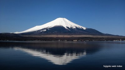 快晴で富士山綺麗だけど羽虫いっぱいw