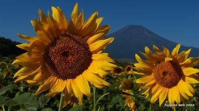 夏の終わりのひまわりと富士山
