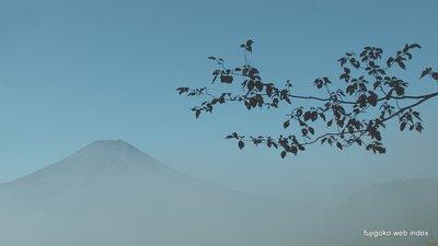 朝霧の富士山〜忍野村