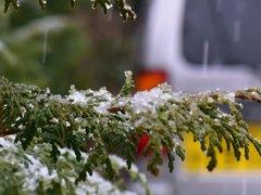 この冬はじめての本格的降雪