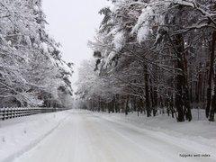 ハリモミ純林付近の積雪