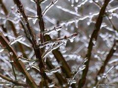 ふたたび雨氷を観測
