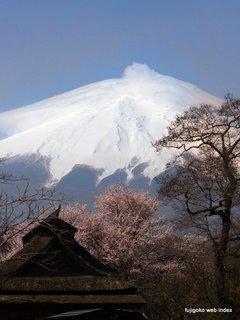 忍野でも桜咲いたけど笠雲。。