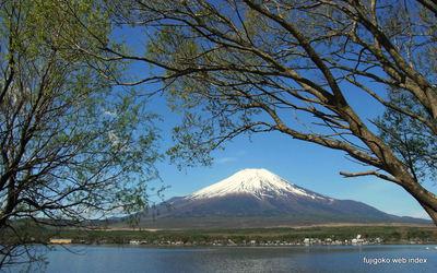 やっと新緑の山中湖と富士山