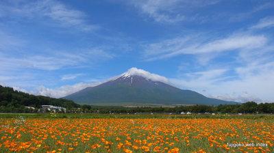 花菱草と富士山と青空
