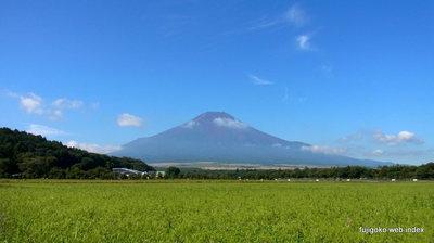 コスモス畑(予定w)と富士山