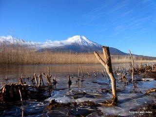 山中湖畔が凍り始めてます
