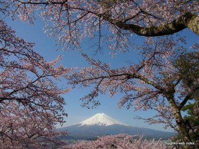 孝徳公園@富士吉田から桜と富士山