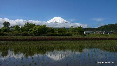 田園の逆さ富士